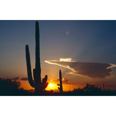 Saguaro National Monument, Arizona